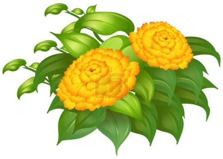 Merigold flowers in green bush