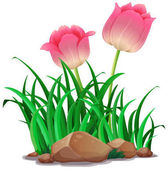 Pink tulip flowers in the garden illustration