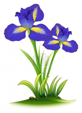 Illustration for Blue iris flowers in bush illustration - Royalty Free Image
