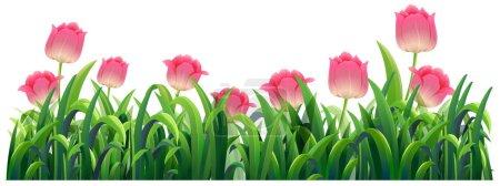 Pink tulip flowers in bush