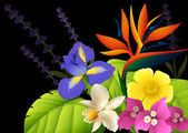Different types of flowers on black background