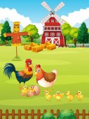 Many chickens on the farm