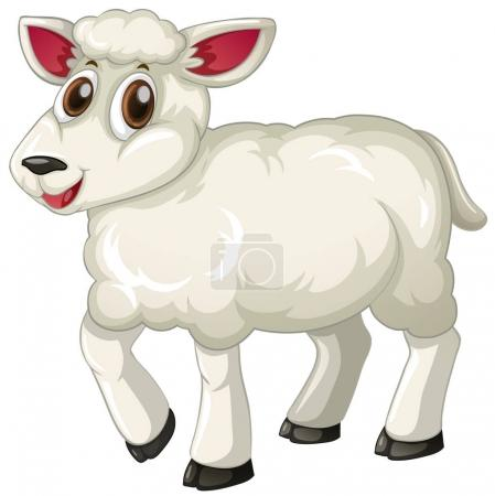 White lamb on white background