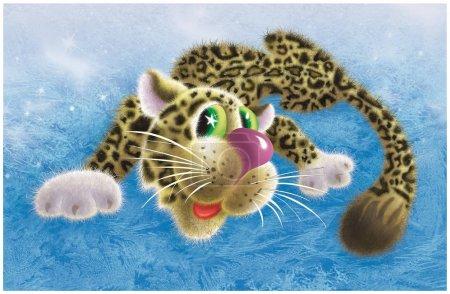 Graceful snow leopard lies on