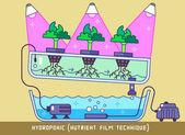 Hydroponic Nutrient Film Technique