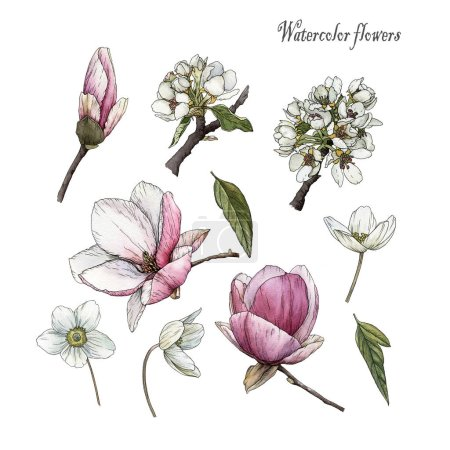 Photo for Flowers set of watercolor magnolia, anemones, cherry blossom and leaves in sketch style. Textile prints - Royalty Free Image