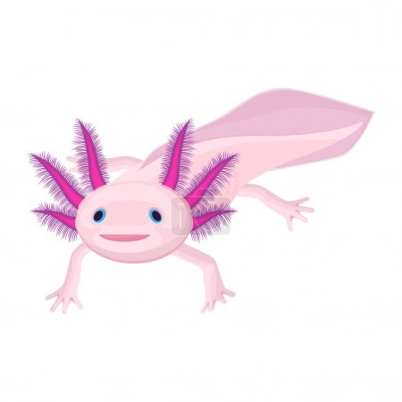 Axolotl pink isolated with four legs on white. Wat...