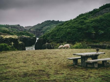 landscape with river, sheep and benches with table in Iceland