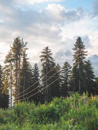Photo for Electrical wires and green plants in beautiful georgian mountains - Royalty Free Image