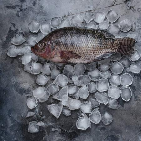 top view of fresh raw fish on ice cubes on grey