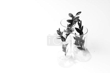 Photo pour Trois plantes d'herbes vertes dans des verres isolés sur fond blanc - image libre de droit