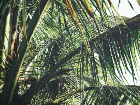 Foto de Cerca de hojas de Palma tropical - Imagen libre de derechos