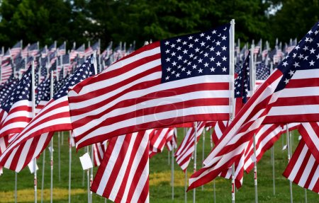 Field of American Flags