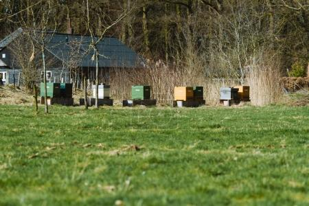 Hives standing on field