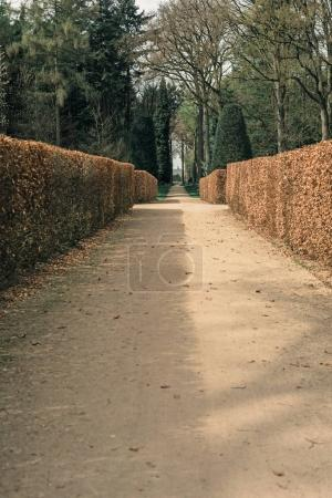 Path with hedge in garden
