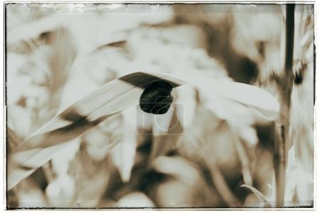 grove snail on leaf