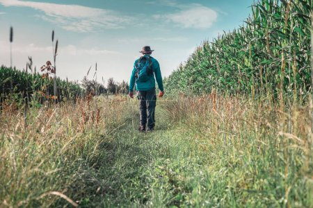 man walking along corn field