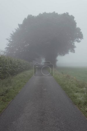 Photo pour Route de campagne avec arbres dans la brume - image libre de droit