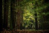 beautiful deciduous forest