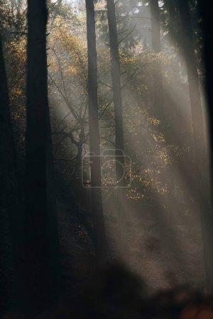 Photo pour Rayons de soleil dans la forêt d'automne brumeux - image libre de droit