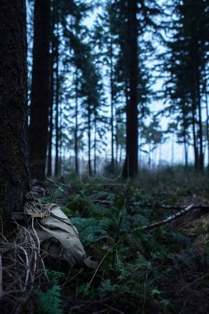 Photo pour Sac à dos vert rétro perdu près d'un arbre dans une forêt sombre - image libre de droit