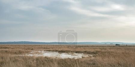 Wide plain with tall yellow grass