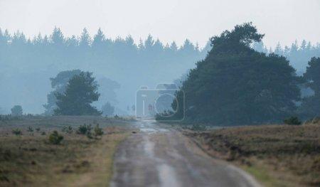 Curved single lane road