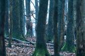 deer between tree trunks