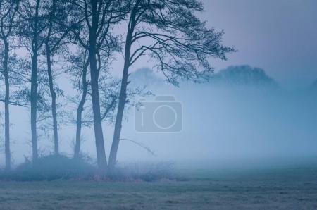 Photo pour Arbres sur Prairie dans le brouillard du matin. - image libre de droit