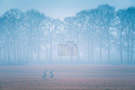 Photo pour Traces de pneu dans Prairie brumeux. Arbres à l'horizon. - image libre de droit