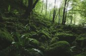 lush vegetation in green forest with moss and plants