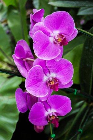 Photo pour Couleur fleurs d'orchidées poussant dans le jardin - image libre de droit