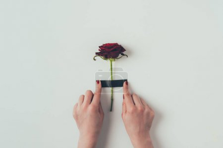 cropped image of woman putting insulating tape on rose on white, valentines day concept