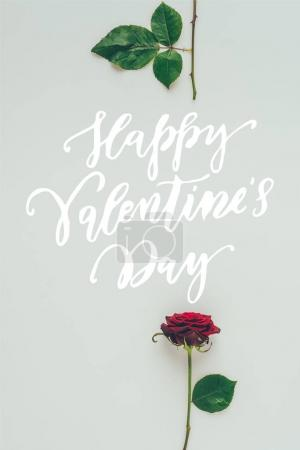 Photo for Top view of red rose parts with text happy valentines day isolated on white - Royalty Free Image