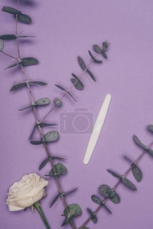 top view of arranged pregnancy test, flower and green eucalyptus leaves isolated on purple