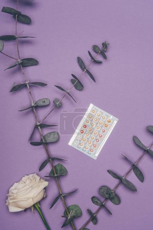 top view of contraceptive pills and flower with eucalyptus leaves isolated on purple