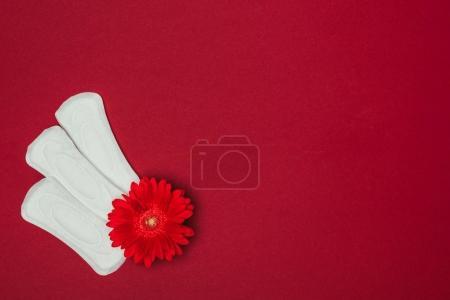 Photo pour Vue de dessus des tampons menstruels arrangés et fleur isolée sur le rouge - image libre de droit