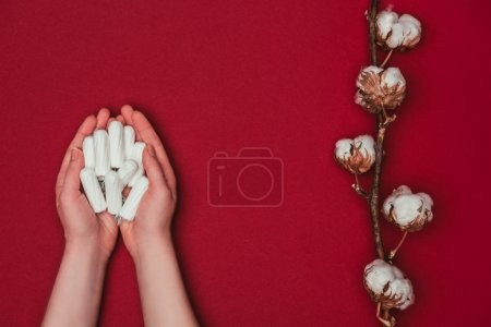 cropped shot of woman holding tampons in hands and cotton twig near by isolated on red