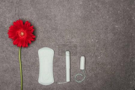 top view of arrangement of red flower, menstrual pad and tampons on grey surface