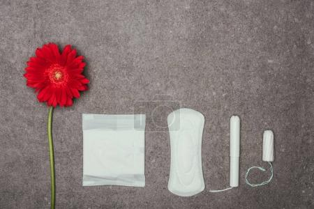top view of arrangement of red flower, menstrual pads and tampons on grey surface