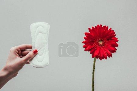 Photo pour Vue partielle de la femme tenant le coussin menstruel à la main avec fleur près par isolé sur gris - image libre de droit
