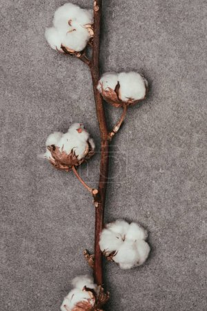close up view of cotton flowers on twig on grey surface