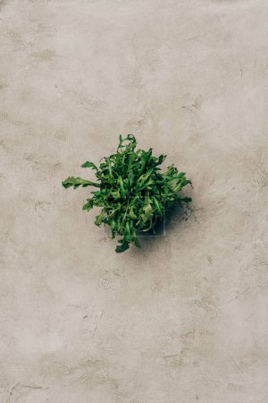 Bunch of green arugula leaves on light background