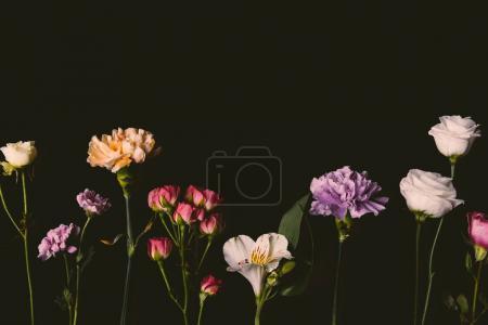 Photo for Beautiful elegant blossoming fresh flowers isolated on black - Royalty Free Image