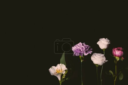 close-up view of beautiful floral composition with pink and purple flowers isolated on black