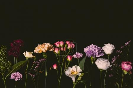 beautiful various fresh blossoming flowers isolated on black