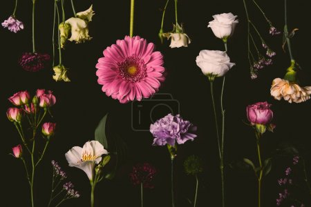 composition of beautiful various blooming flowers isolated on black