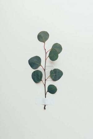 beautiful green leaves on twig on grey