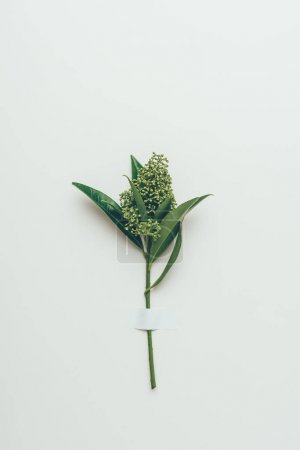 Photo for Beautiful tender flower buds with green leaves on grey - Royalty Free Image