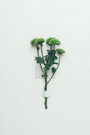 elegant green flowers with leaves on twig on grey